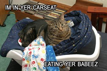 Lolcat_carseat_3