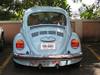 Blue_bug